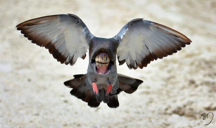 instruction on bird mouth bits