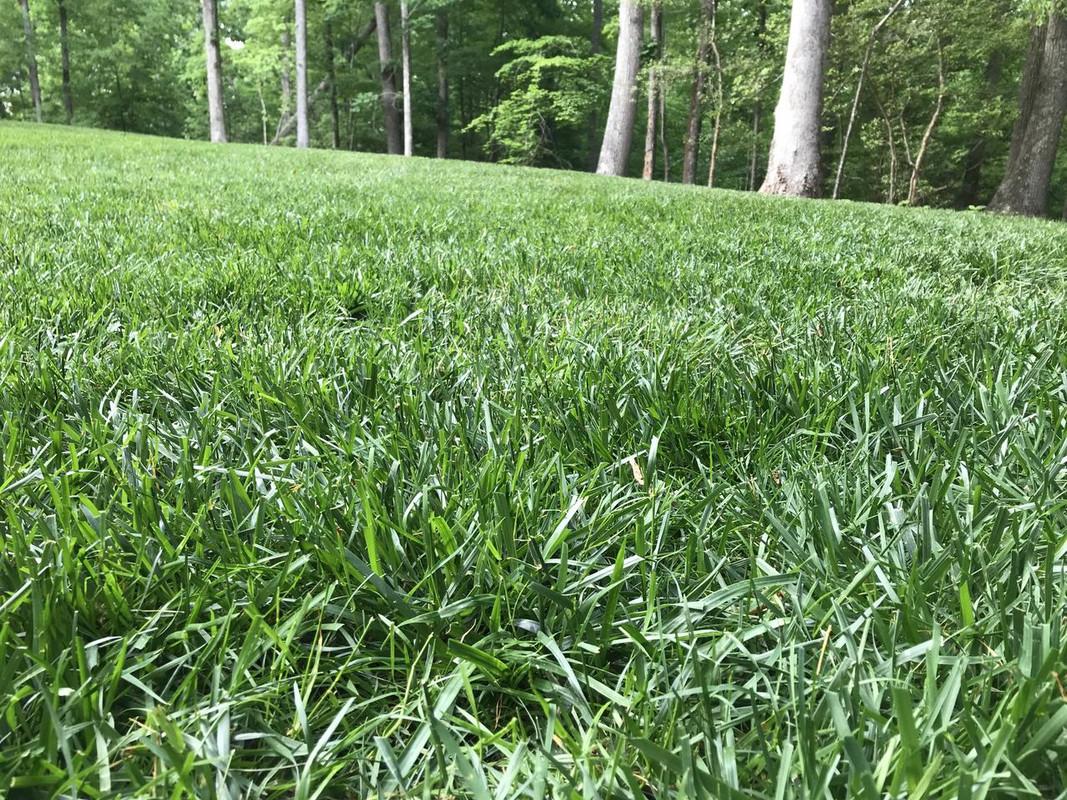 garden safe neem oil extract mixing instructions