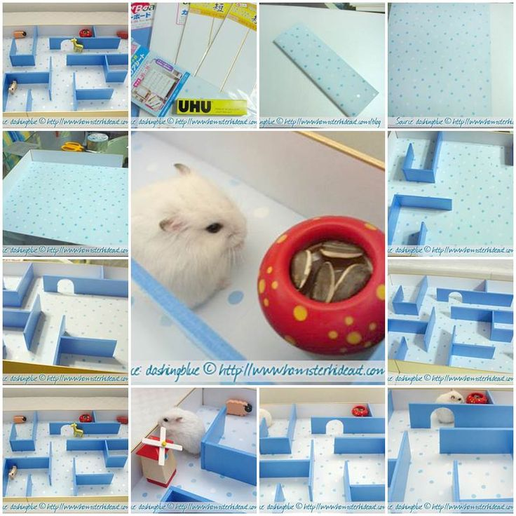 hamster in a house instructions
